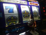 dishonor gnome losing it all in slots