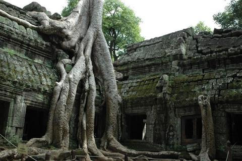 Tree from Tomb Raider